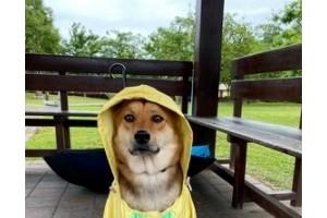 逛街突逢下雨妈妈用黑塑料袋将狗子打包后它郁闷了…