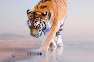 除人类以外将一切动物扩大200倍谁会是地球最强霸者