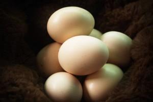 婴儿多大可以吃蛋白蛋白的营养价值